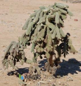 Coral Cactus-2-969x1024